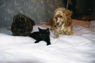 Nos petites bêtes et nous... Img07513