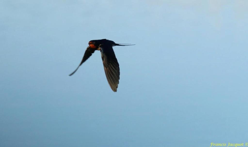 [Ouvert] FIL - Oiseaux. - Page 28 01149