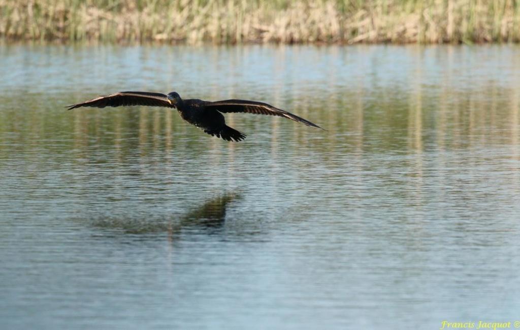 [Ouvert] FIL - Oiseaux. - Page 29 01151