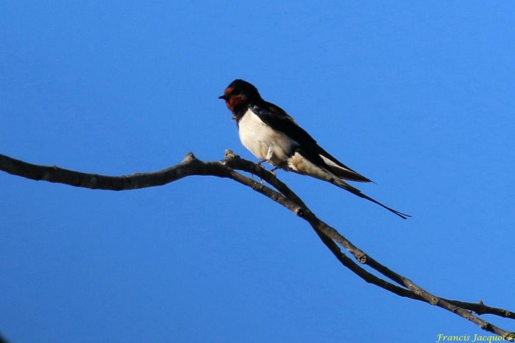 [Ouvert] FIL - Oiseaux. - Page 29 01152