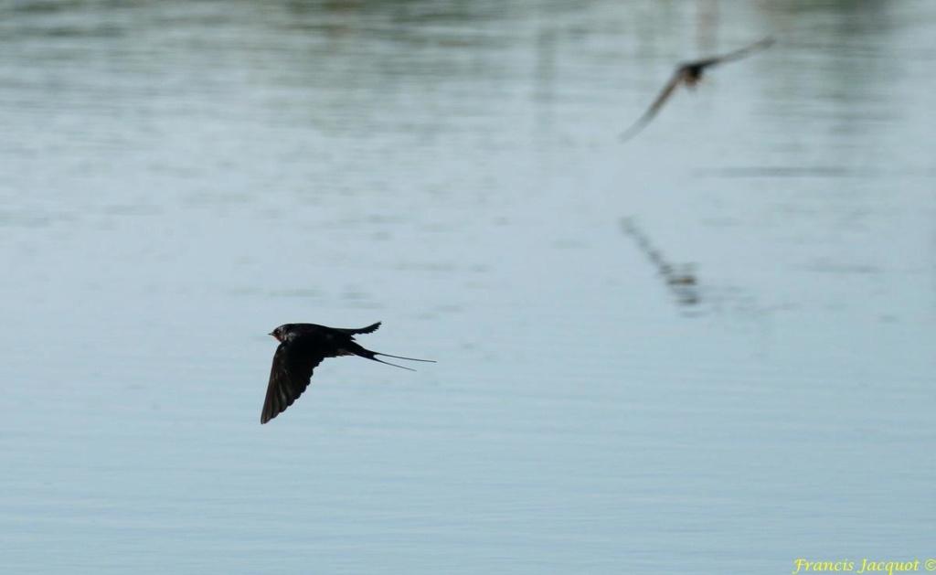 [Ouvert] FIL - Oiseaux. - Page 28 02146