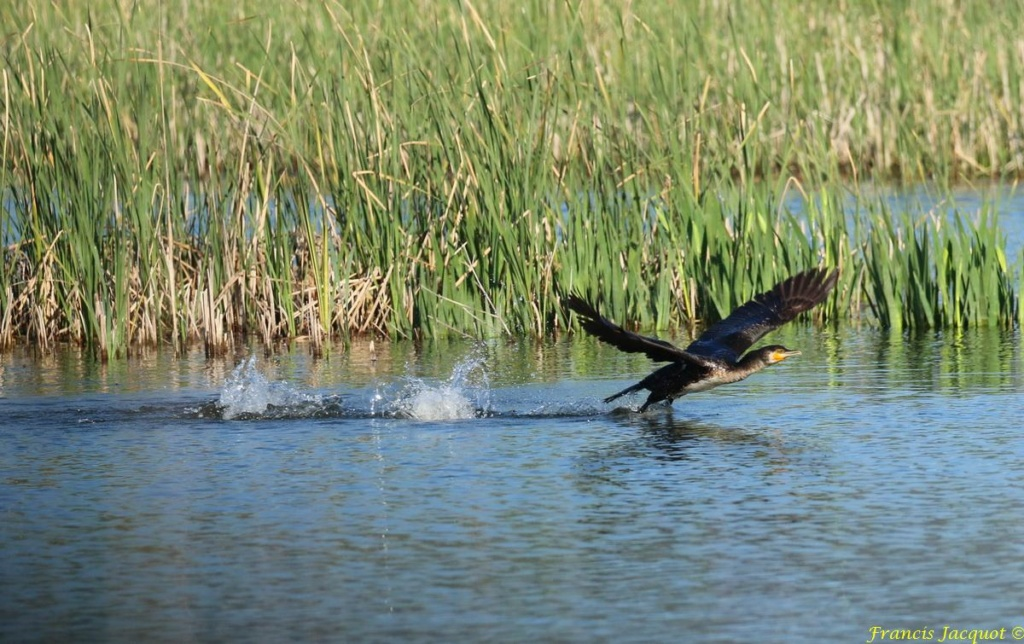 [Ouvert] FIL - Oiseaux. - Page 29 02147