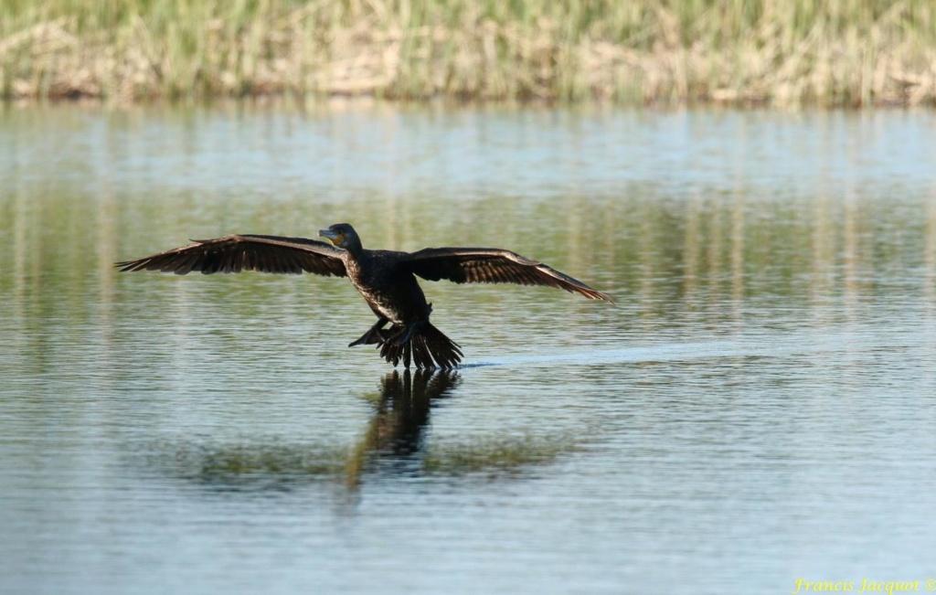 [Ouvert] FIL - Oiseaux. - Page 29 02148