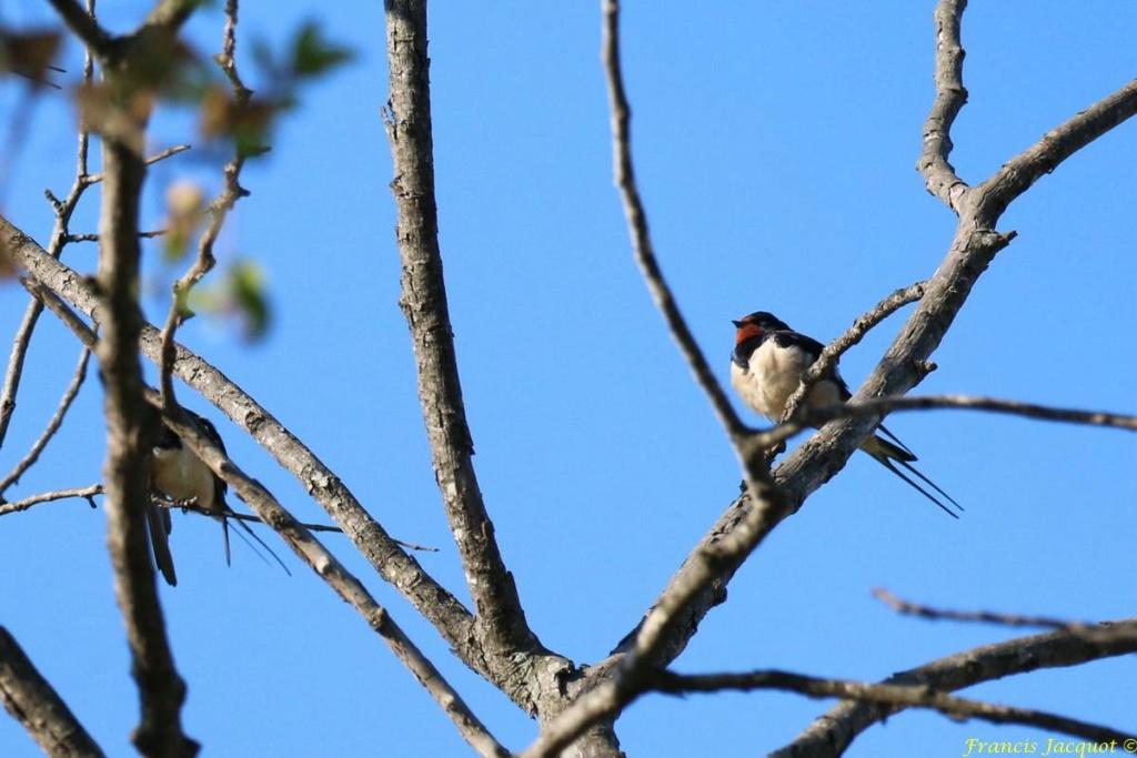 [Ouvert] FIL - Oiseaux. - Page 29 02149