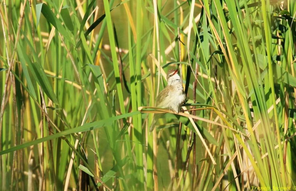 [Ouvert] FIL - Oiseaux. - Page 31 02153