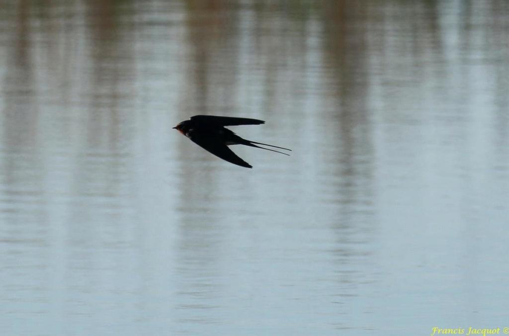 [Ouvert] FIL - Oiseaux. - Page 28 03150