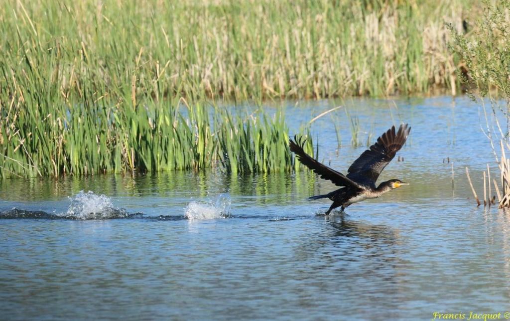 [Ouvert] FIL - Oiseaux. - Page 29 03151