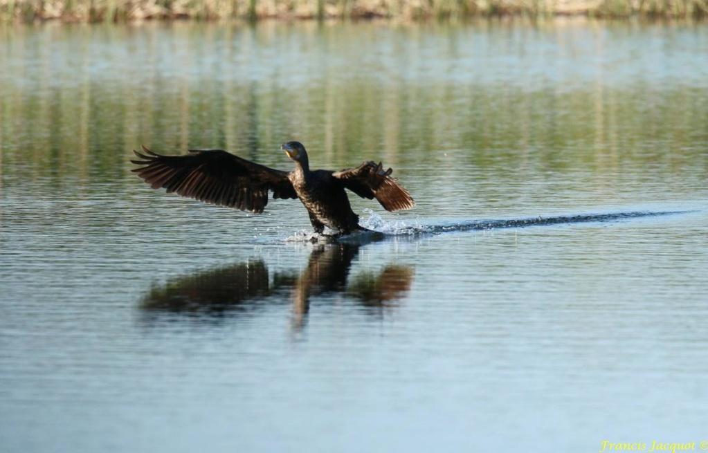 [Ouvert] FIL - Oiseaux. - Page 29 03152