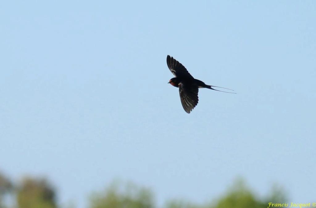 [Ouvert] FIL - Oiseaux. - Page 28 04142