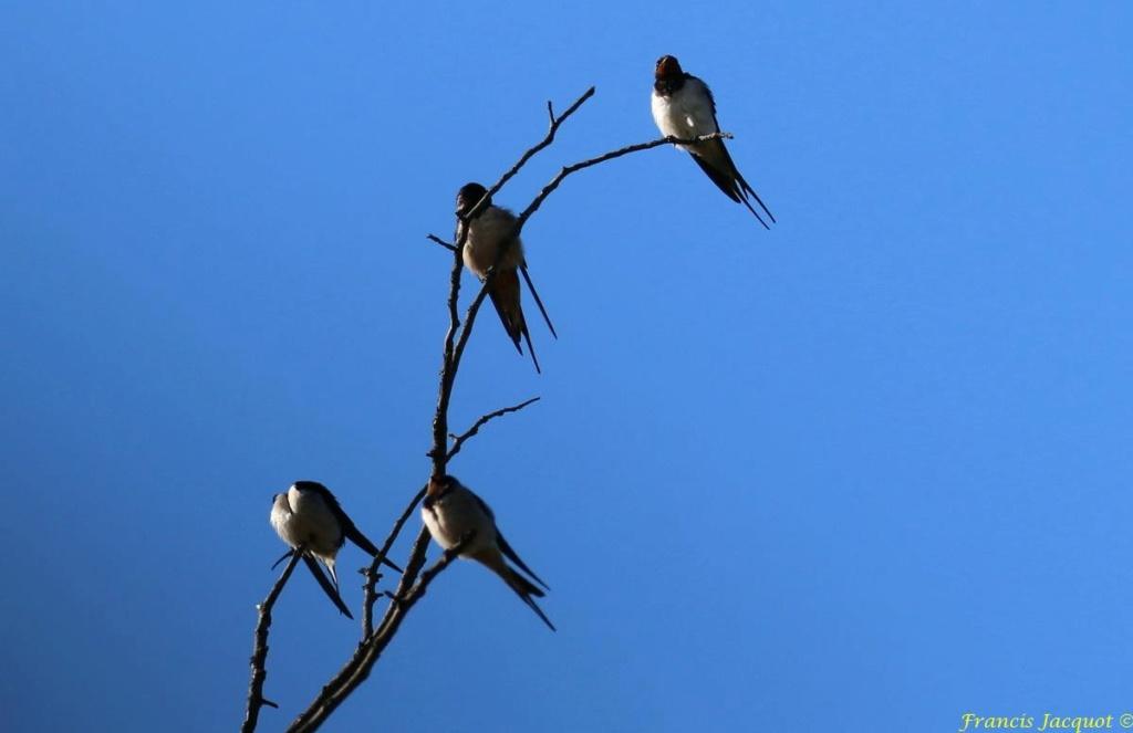 [Ouvert] FIL - Oiseaux. - Page 29 04145