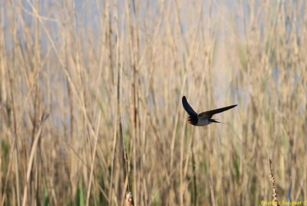 [Ouvert] FIL - Oiseaux. - Page 28 05141
