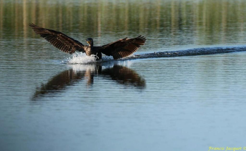 [Ouvert] FIL - Oiseaux. - Page 29 05143
