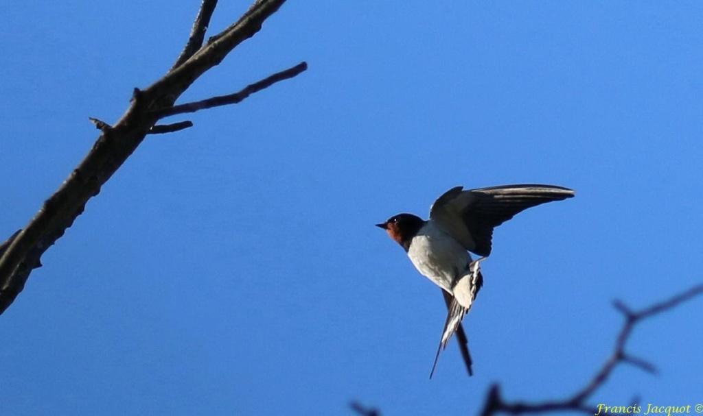 [Ouvert] FIL - Oiseaux. - Page 29 05145