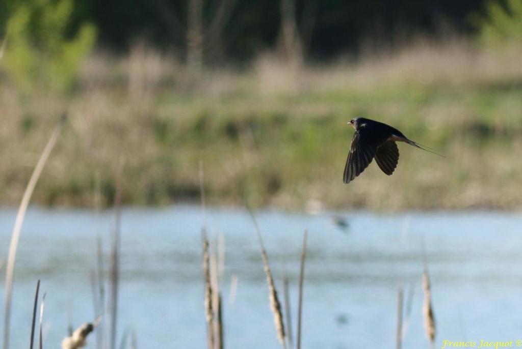 [Ouvert] FIL - Oiseaux. - Page 28 06137