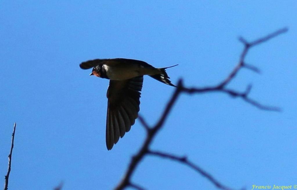 [Ouvert] FIL - Oiseaux. - Page 29 06140