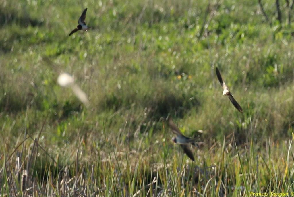 [Ouvert] FIL - Oiseaux. - Page 28 07142
