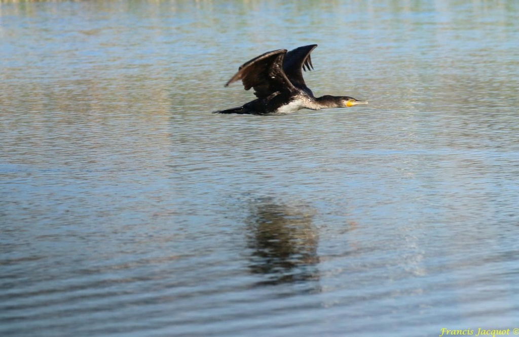 [Ouvert] FIL - Oiseaux. - Page 29 07143