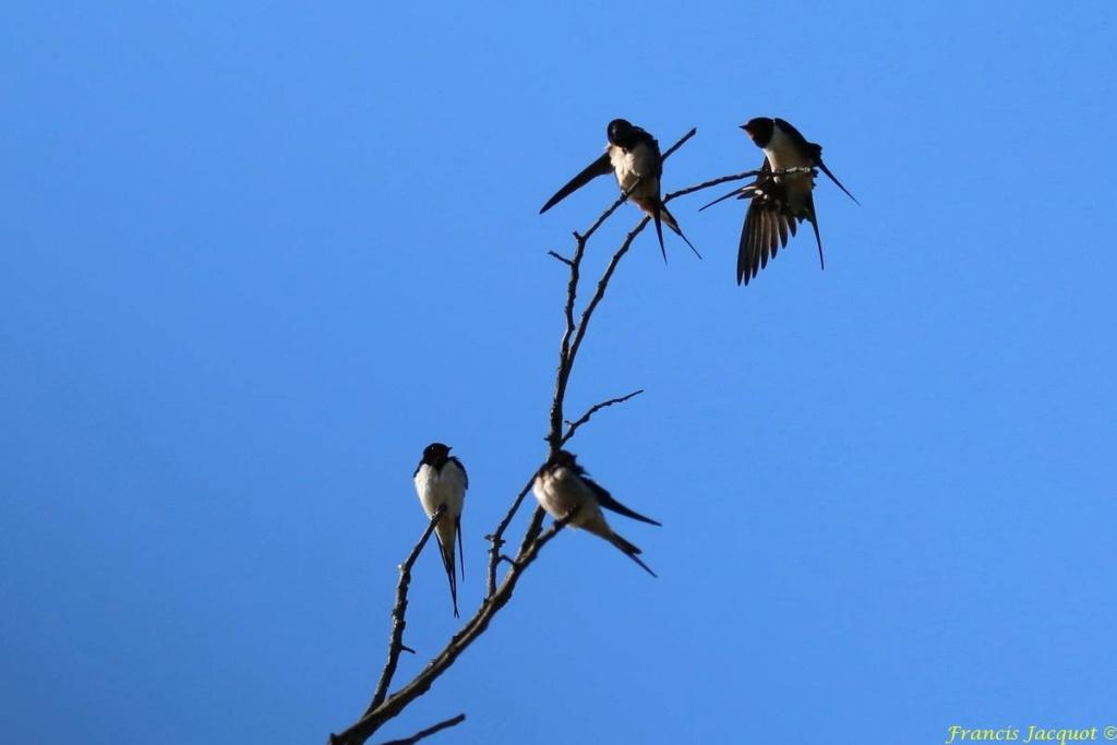 [Ouvert] FIL - Oiseaux. - Page 29 07145