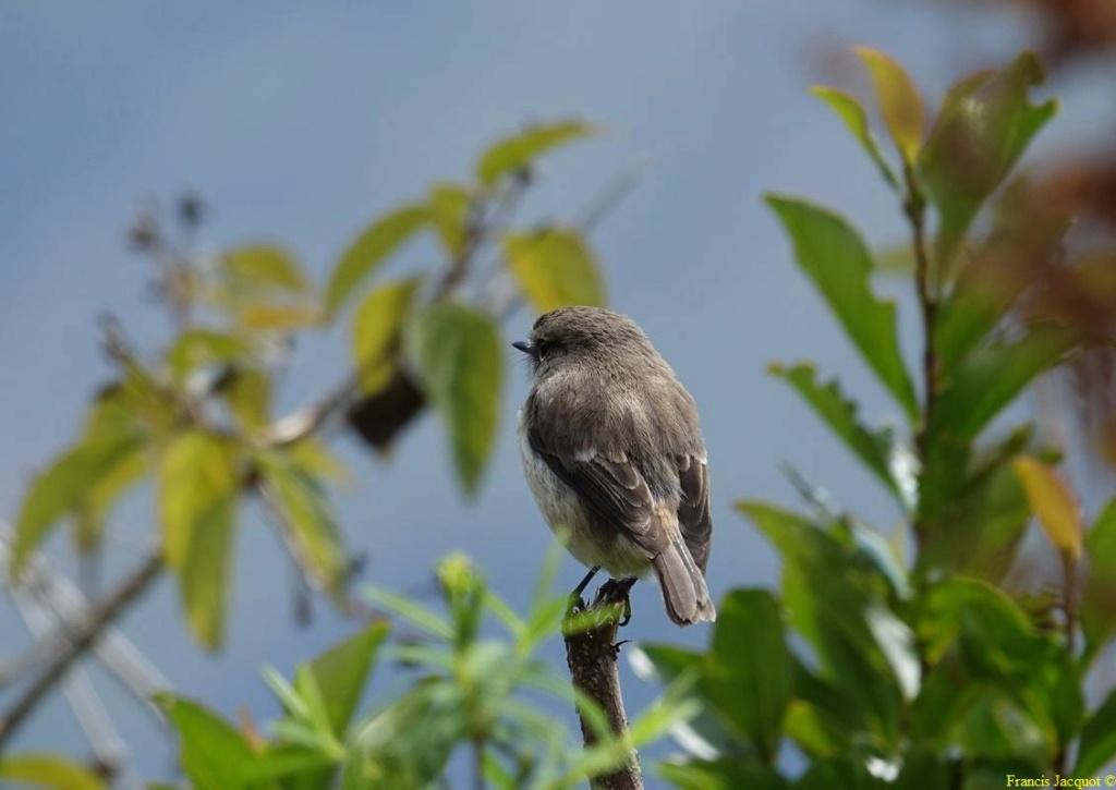 [Ouvert] FIL - Oiseaux. - Page 16 0762