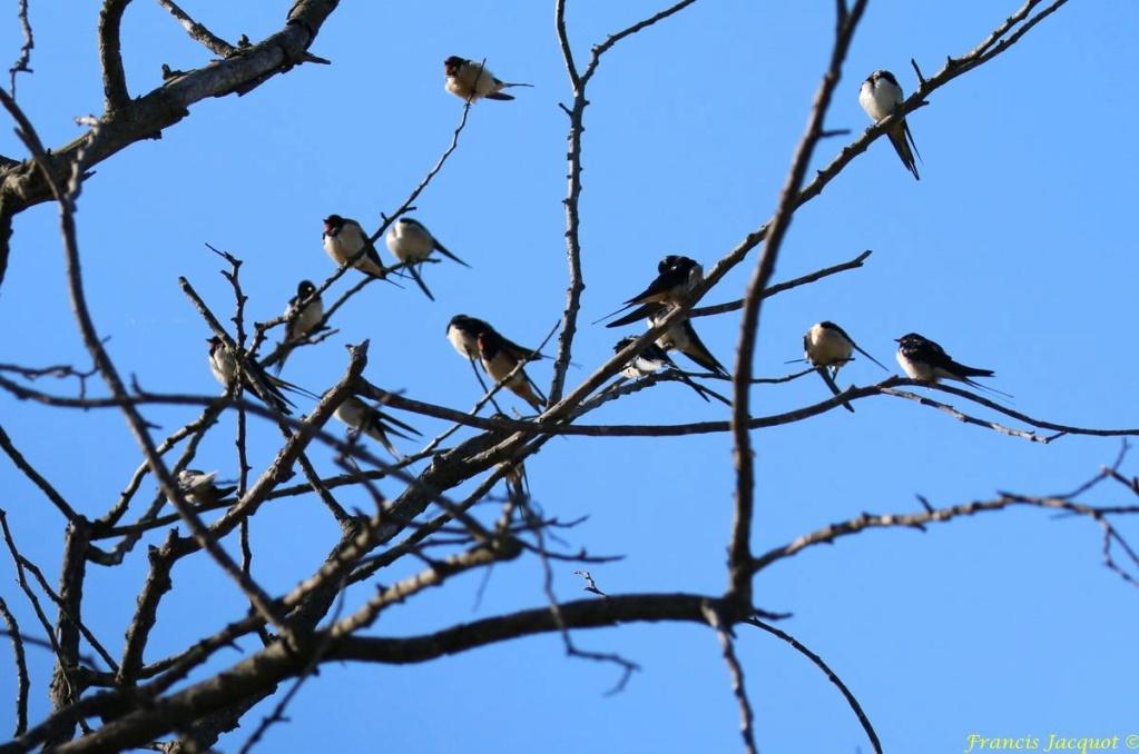 [Ouvert] FIL - Oiseaux. - Page 29 08136