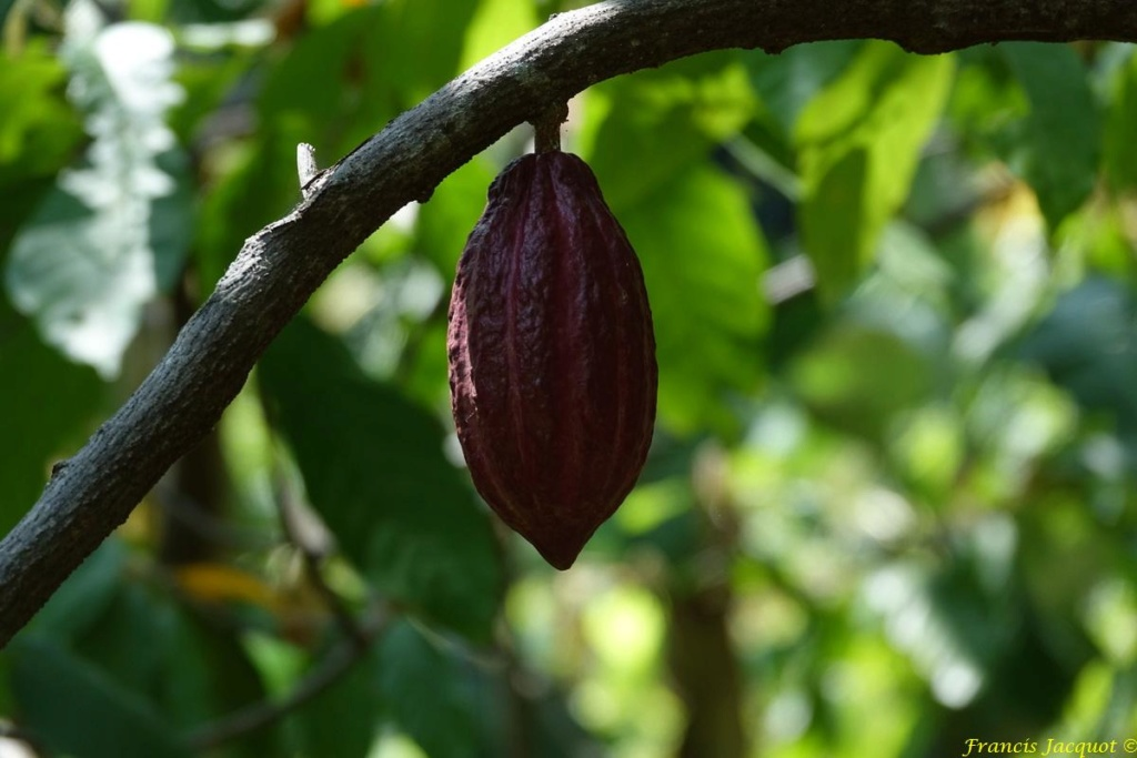 [Fil ouvert] Fruit sur l'arbre - Page 11 222