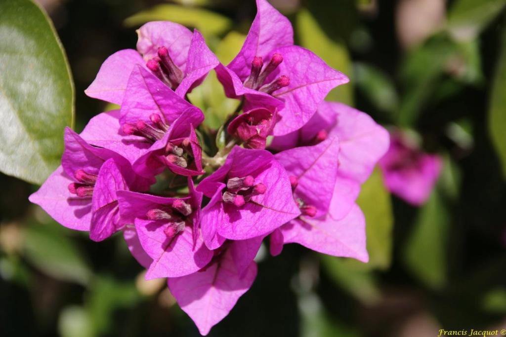 Thème du mois d'octobre 2019 :   Fleurs et jardins  226