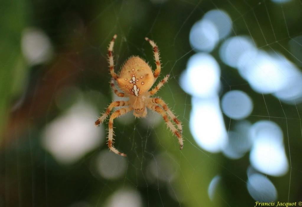 (FIL OUVERT à tous) vous aimez les araignées? - Page 6 Aa110