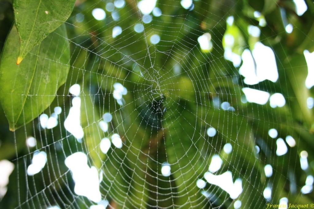 (FIL OUVERT à tous) vous aimez les araignées? - Page 6 Aa210