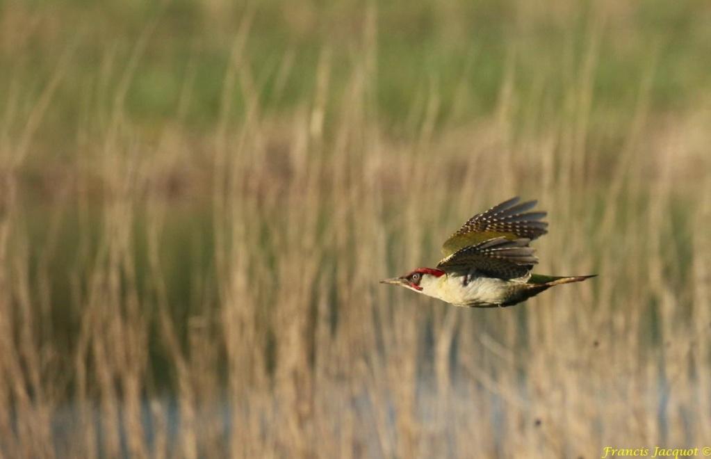 [Ouvert] FIL - Oiseaux. - Page 29 Img_0010