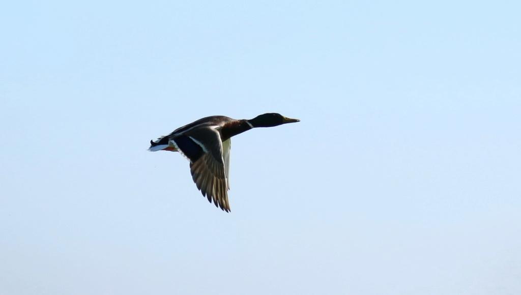 [Ouvert] FIL - Oiseaux. - Page 28 Img_0311