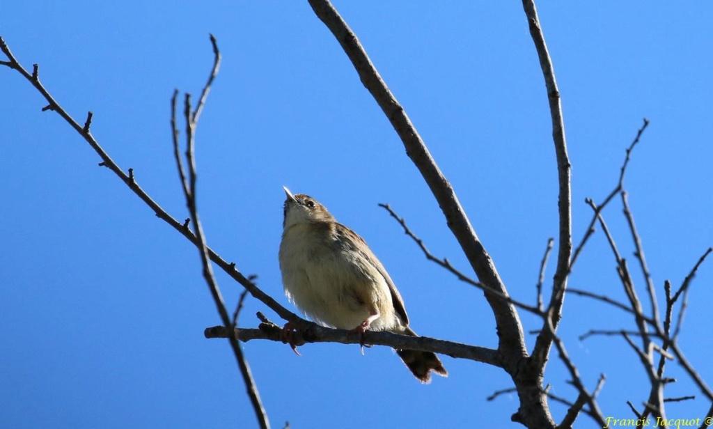 [Ouvert] FIL - Oiseaux. - Page 31 Img_1220