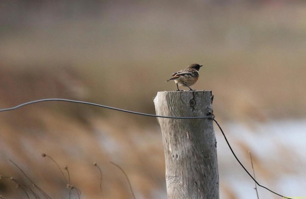 [Ouvert] FIL - Oiseaux. Img_7027