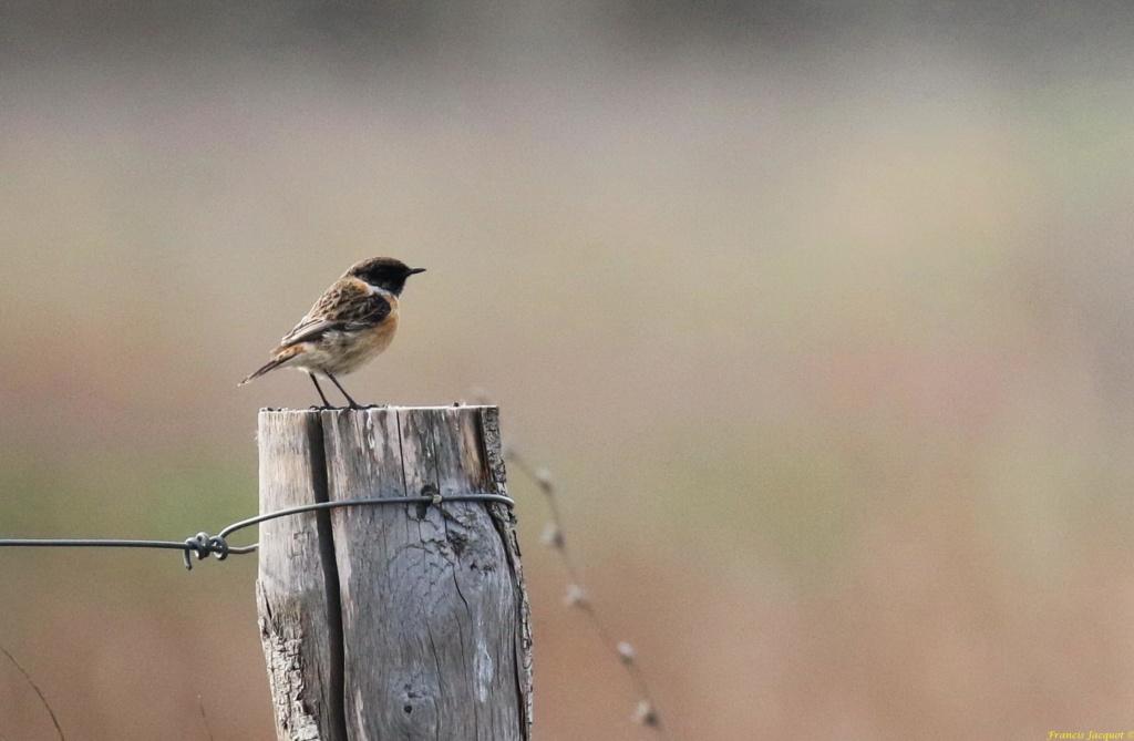 [Ouvert] FIL - Oiseaux. Img_7028