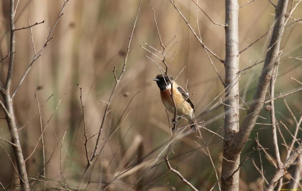 [Ouvert] FIL - Oiseaux. Img_7029