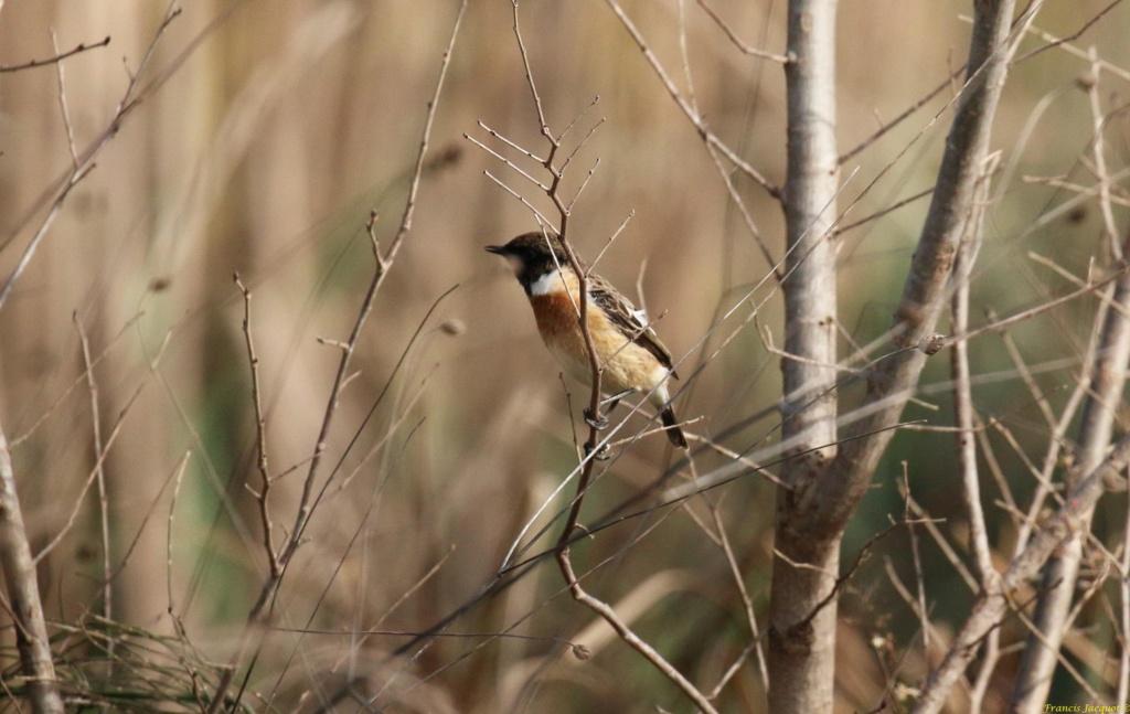 [Ouvert] FIL - Oiseaux. Img_7030