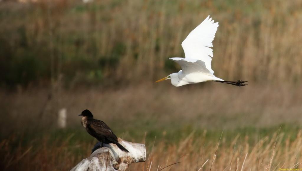 [Ouvert] FIL - Oiseaux. Img_7035