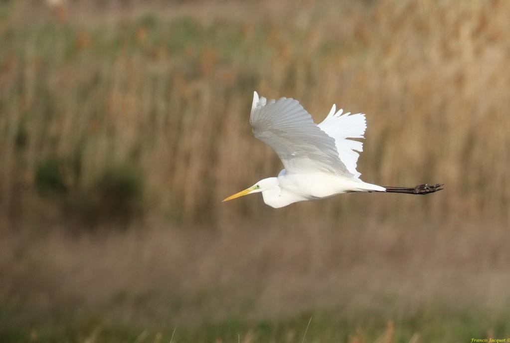 [Ouvert] FIL - Oiseaux. Img_7036