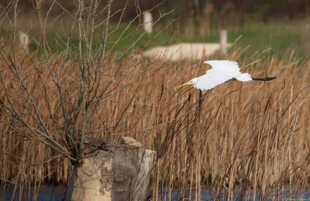 [Ouvert] FIL - Oiseaux. Img_7037