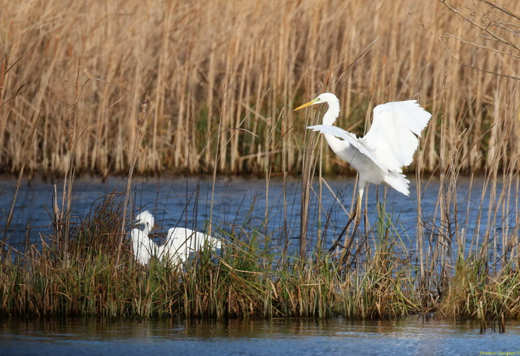 [Ouvert] FIL - Oiseaux. Img_7038