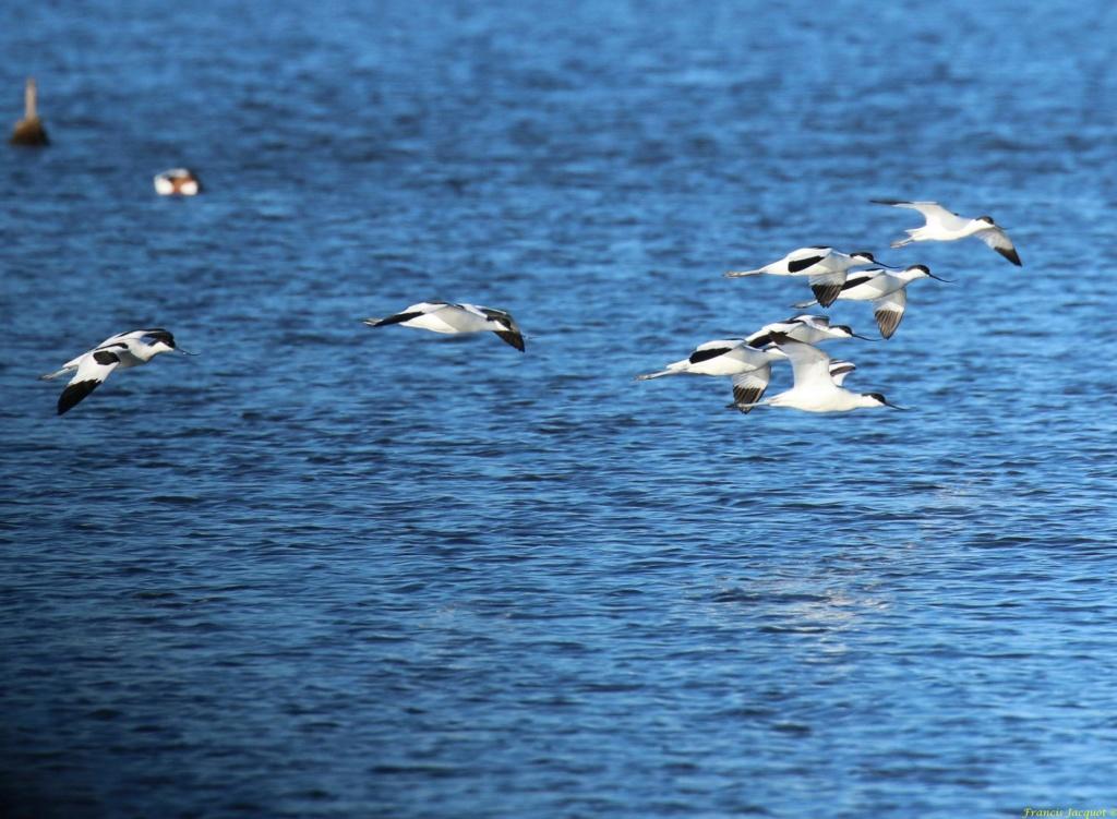 [Ouvert] FIL - Oiseaux. Img_7043
