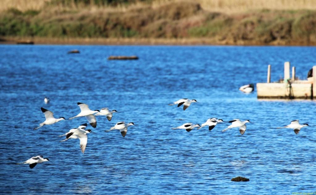 [Ouvert] FIL - Oiseaux. Img_7045