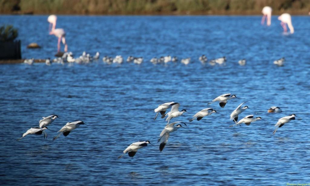 [Ouvert] FIL - Oiseaux. Img_7046