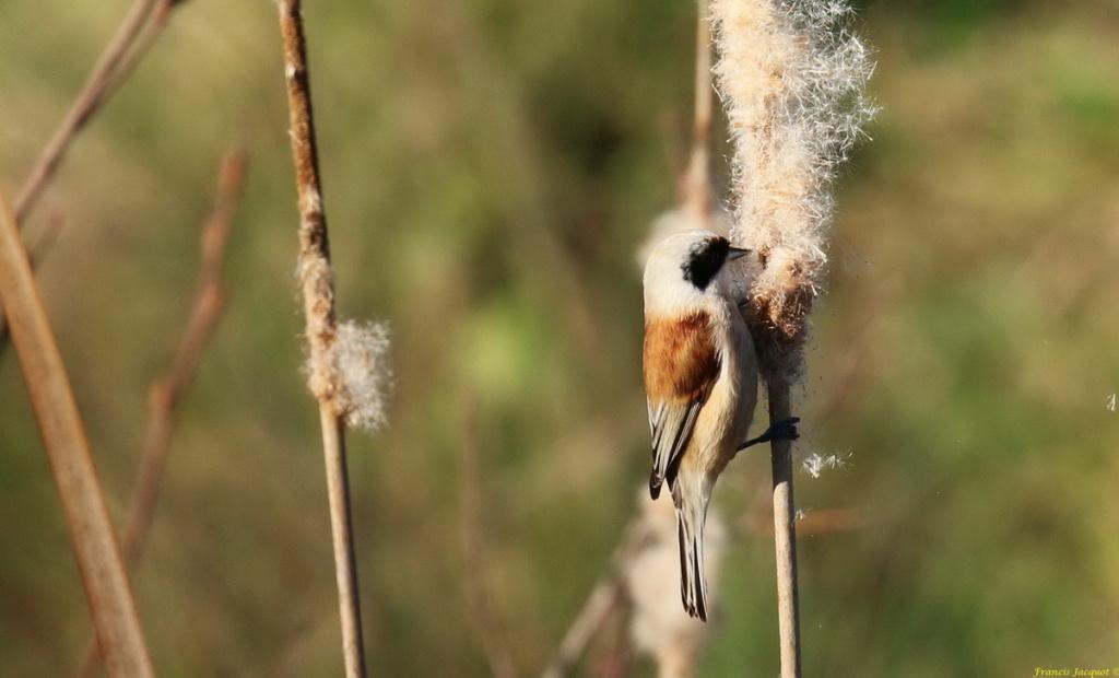 [Ouvert] FIL - Oiseaux. Img_7225