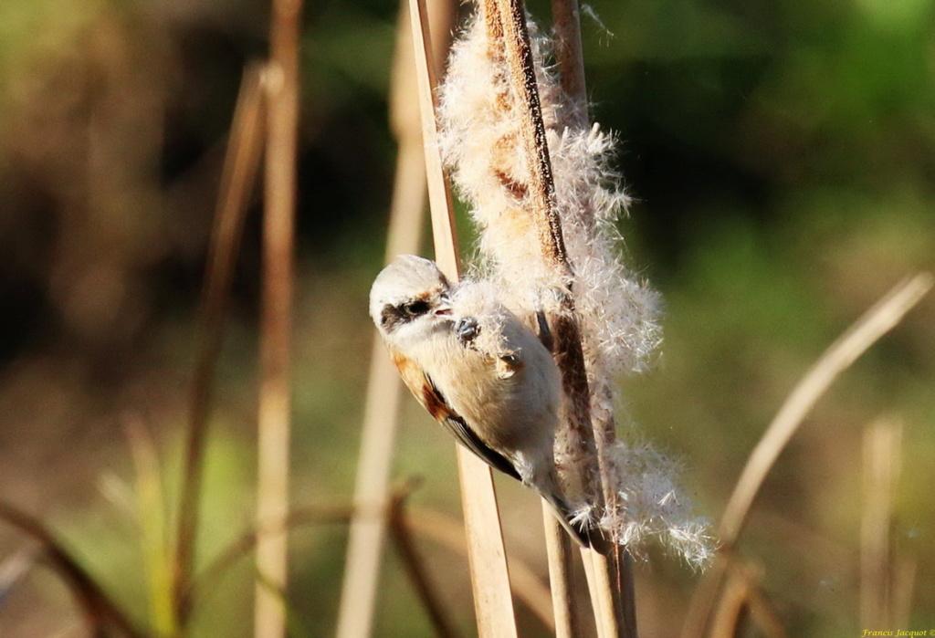 [Ouvert] FIL - Oiseaux. Img_7226