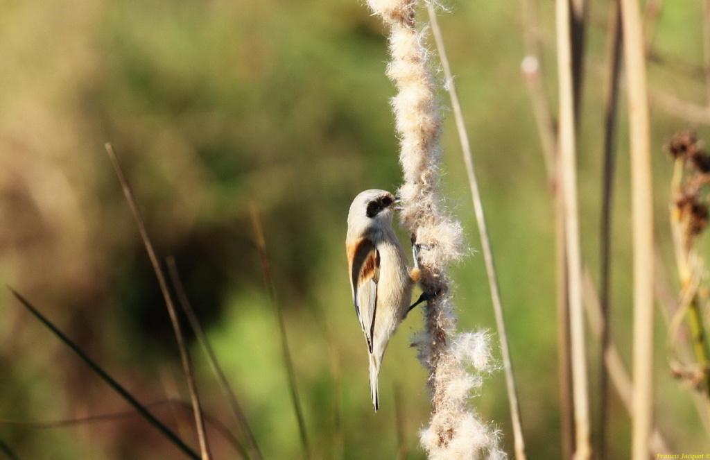 [Ouvert] FIL - Oiseaux. Img_7227