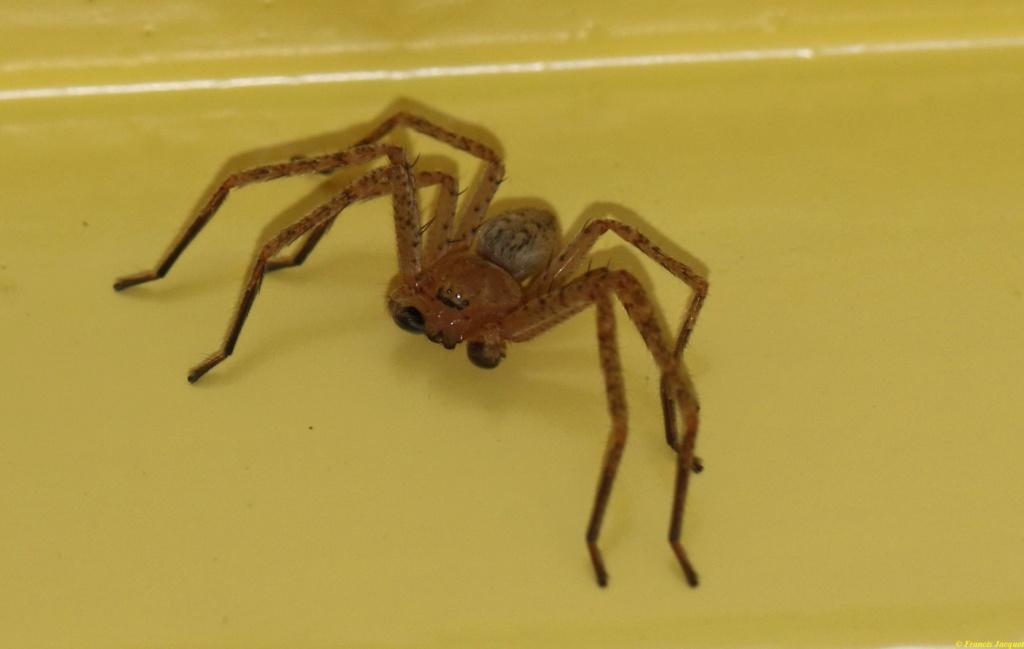 (FIL OUVERT à tous) vous aimez les araignées? - Page 7 Img_7514