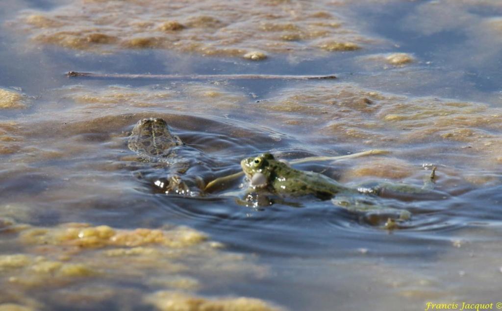 [Fil ouvert à tous] Reptiles, serpents, tortues, amphibiens, ... - Page 10 Img_9117