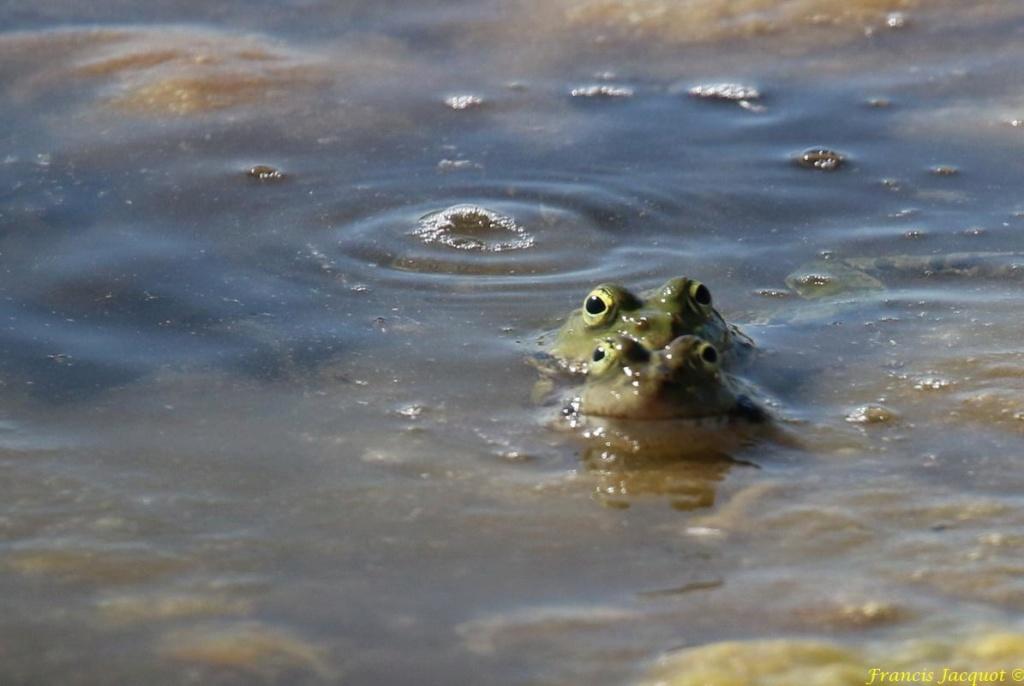 [Fil ouvert à tous] Reptiles, serpents, tortues, amphibiens, ... - Page 10 Img_9118