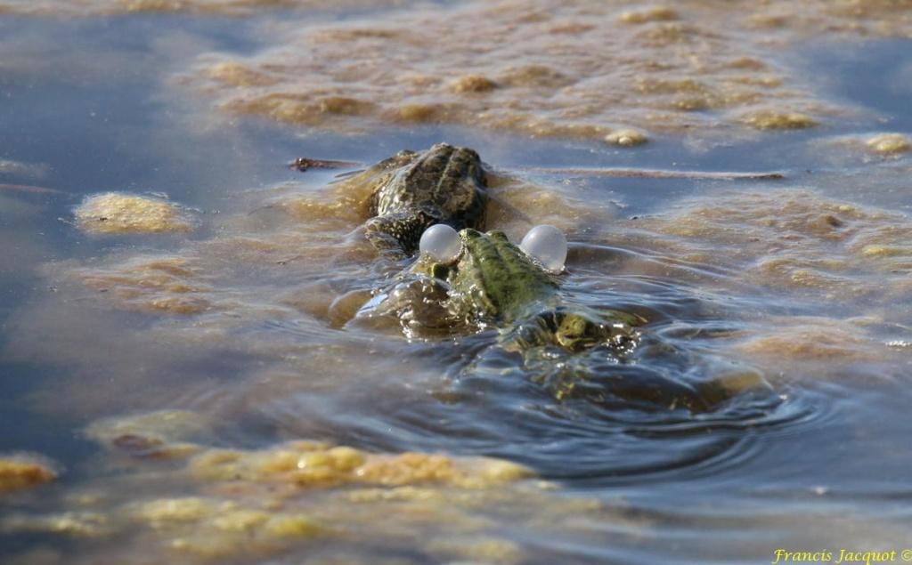 [Fil ouvert à tous] Reptiles, serpents, tortues, amphibiens, ... - Page 10 Img_9119