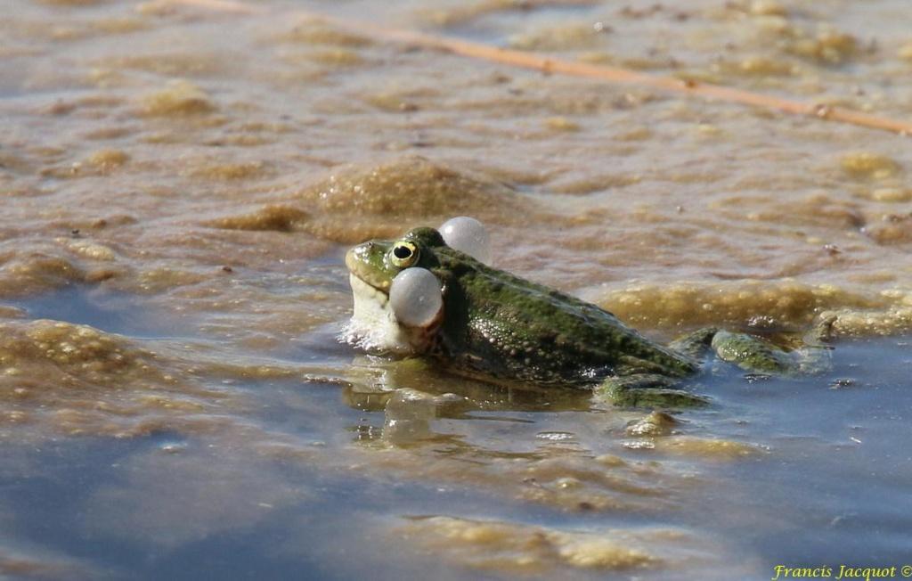 [Fil ouvert à tous] Reptiles, serpents, tortues, amphibiens, ... - Page 10 Img_9121